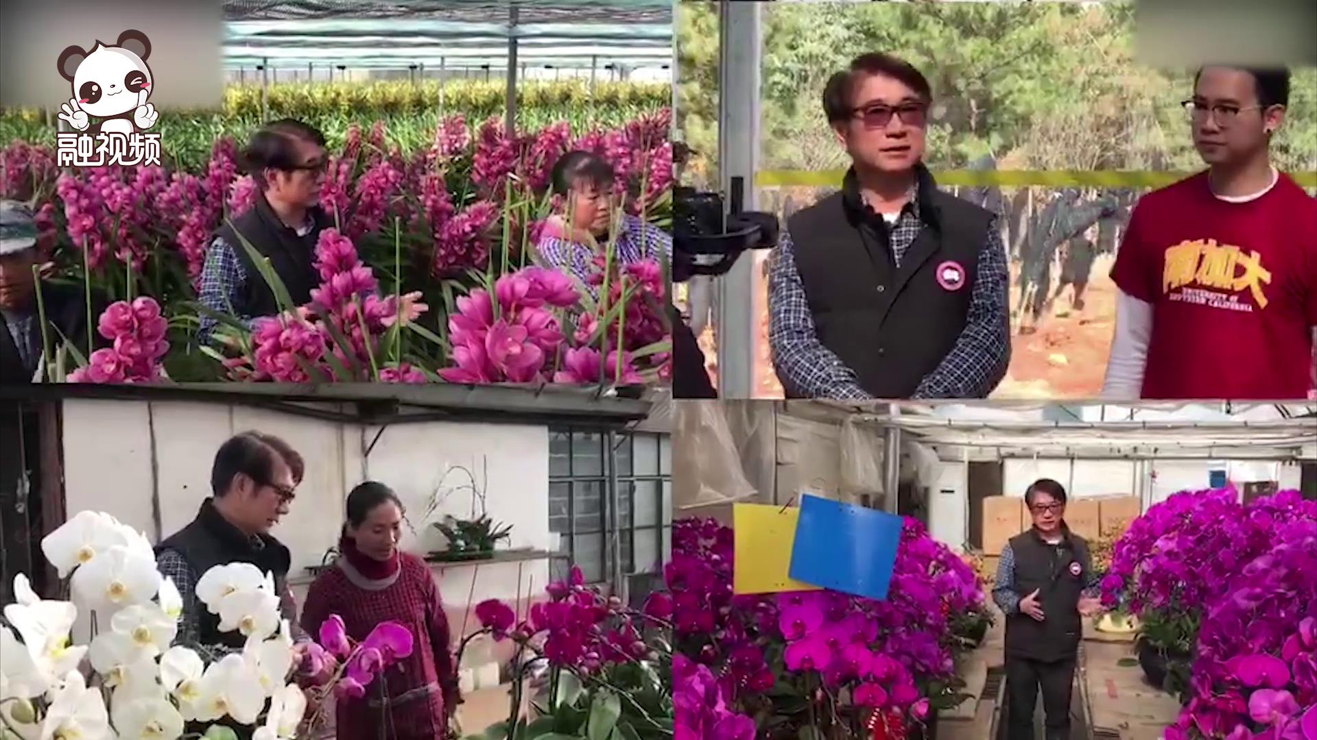 专访台商陈嘉雄:将云南花卉出口到越南图片