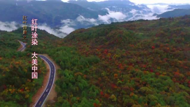 红叶四题之一:红叶涂染 大美中国图片