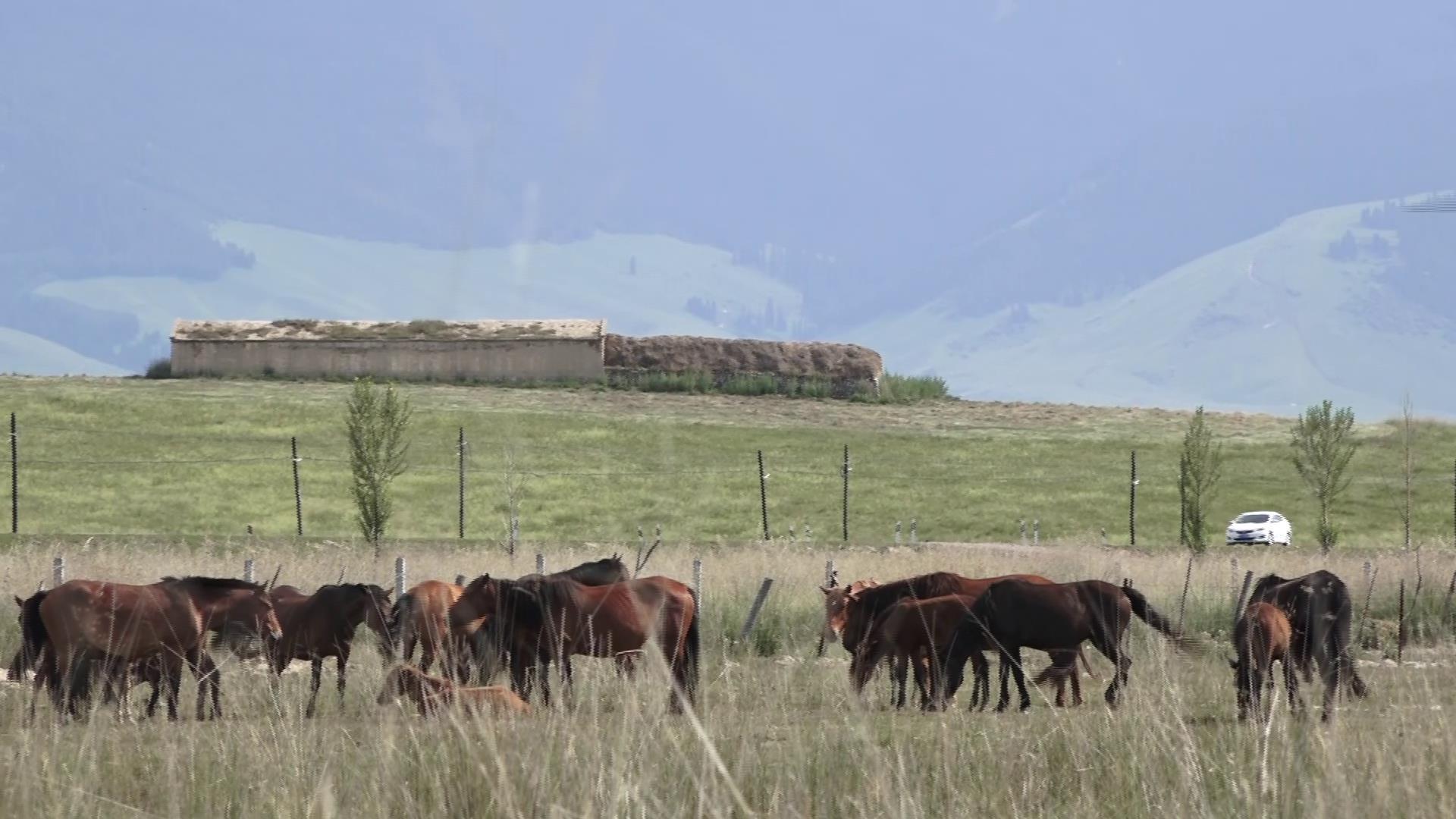 漫遊新疆-快樂遊牧人图片