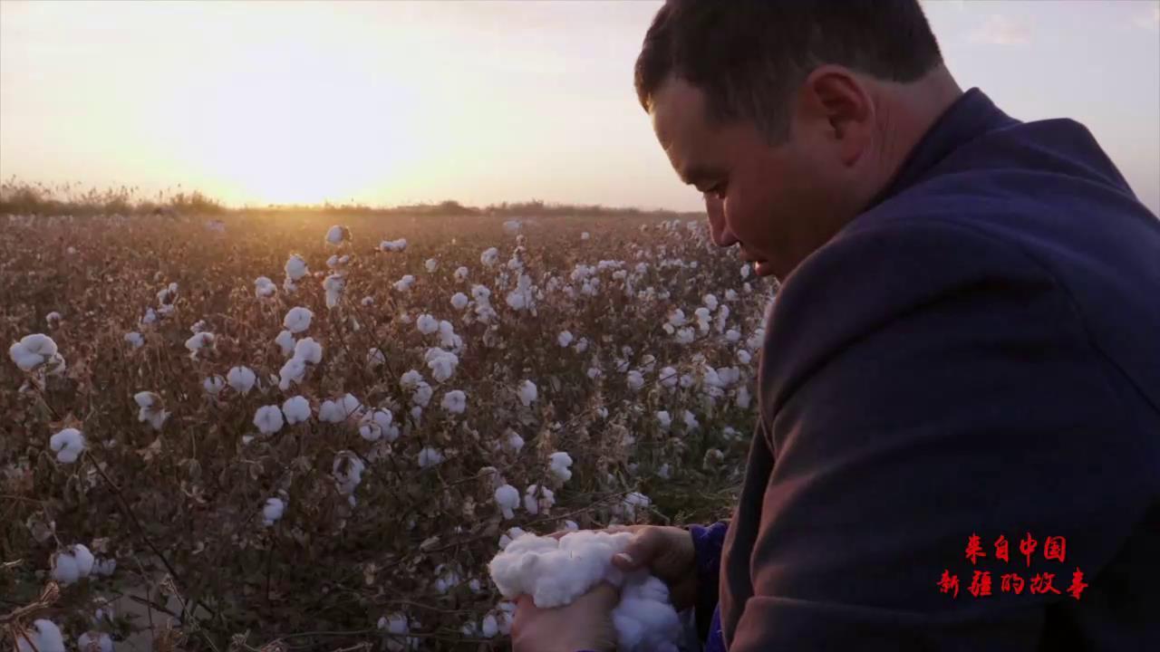 來自中國新疆的故事——棉農吐爾地圖片