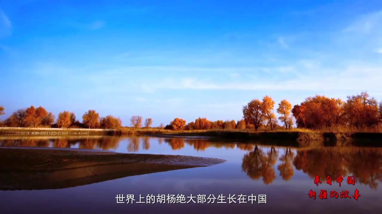 来自中国新疆的故事——胡杨礼赞图片