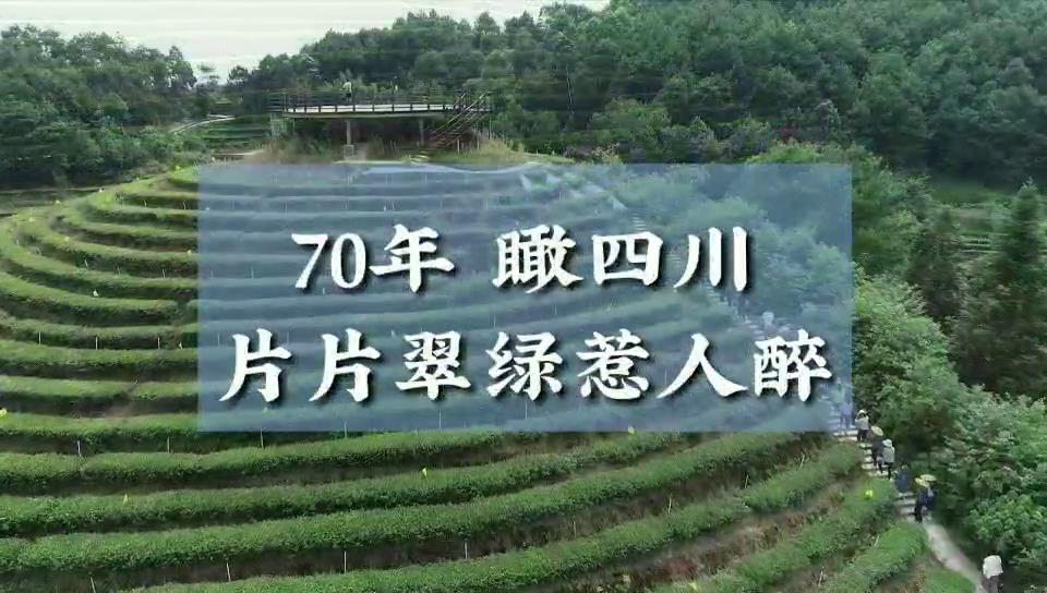 70年 瞰四川| 片片翠绿惹人醉图片