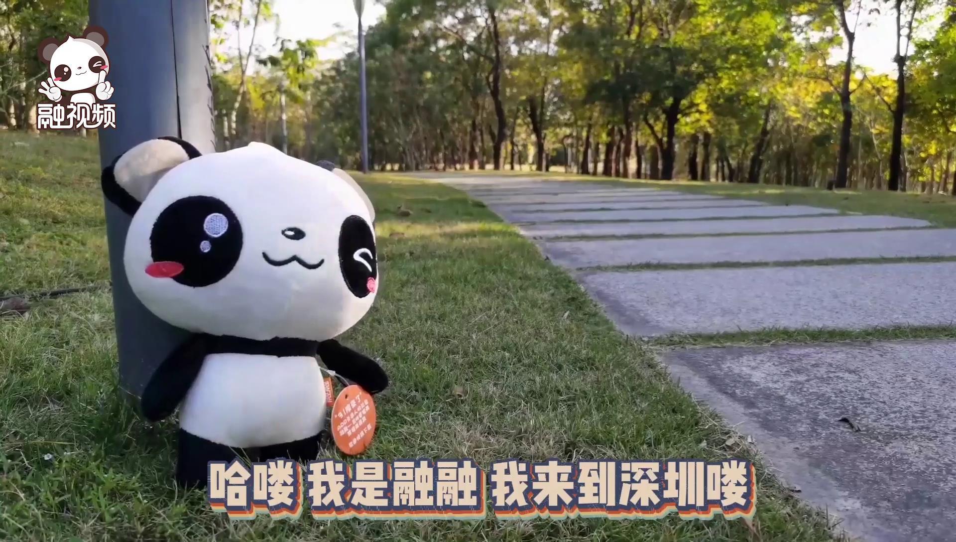 融融打卡深圳湾公园图片